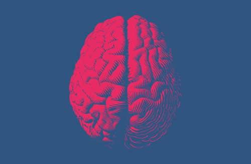 digital image of a brain